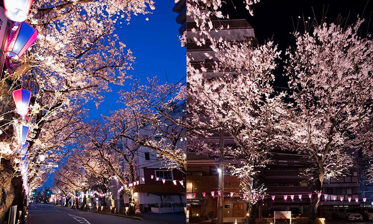 【オーデリック】東村山駅東口さくら通りの照明施工事例を公開の画像